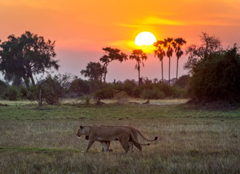 Watching Sunset and Wildlife in Nairobi