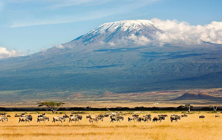 Wildlife at Mount Kilimanjaro Climb