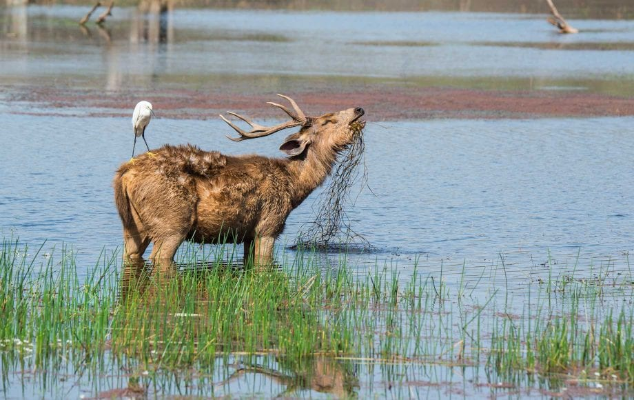 Wild life in Ranthambore National Park