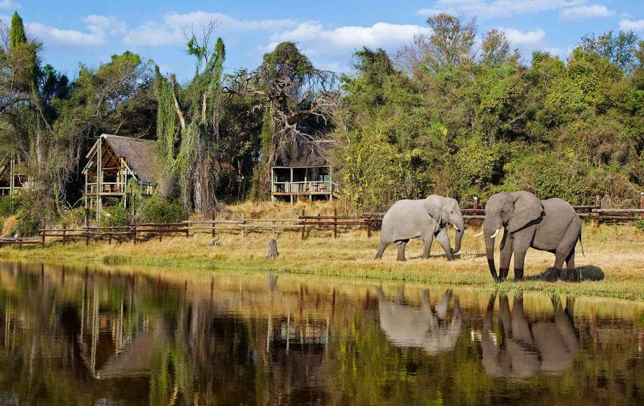 Elephants in peace next to lake at Savuti Chobe African Safari