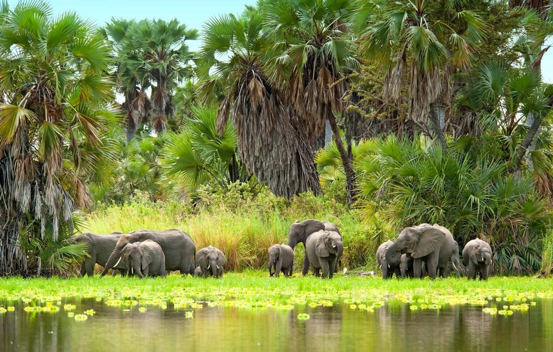 Group of Elephants at Selous and Ruaha Game Reserves