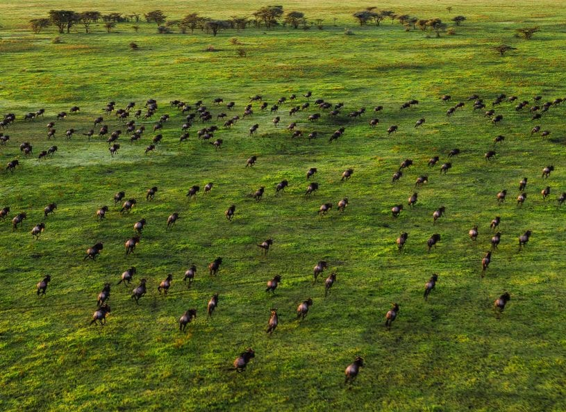 Wildlife at Serengeti national park